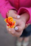 Цветок Нижняя Калифорния Sur Стоковые Фото
