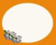 Цветок овальной рамки белый Стоковое Фото