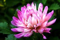 цветок довольно Стоковые Фото