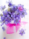 цветок одичалый Стоковое Изображение