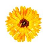 цветок одно Стоковая Фотография RF