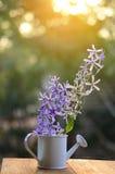 Цветок лозы венка ферзя Стоковые Изображения