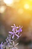 Цветок лозы венка ферзя Стоковое Фото