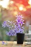 Цветок лозы венка ферзя Стоковое Изображение