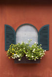 Цветок окна Стоковое Изображение