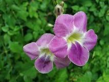 Цветок около китайского виска Стоковое фото RF