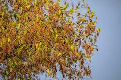 цветок ольшаника стоковое изображение rf