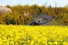 Цветок дома и рапса Стоковые Фотографии RF