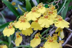 Цветок орхидеи в саде орхидеи на зиме или весеннем дне стоковые фото