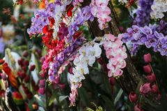 Цветок орхидеи в Таиланде Стоковая Фотография RF
