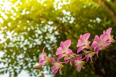 Цветок орхидеи в тропическом конце сада вверх вектор детального чертежа предпосылки флористический стоковые фото