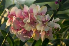 Цветок орхидеи использован для того чтобы украсить сад стоковые изображения