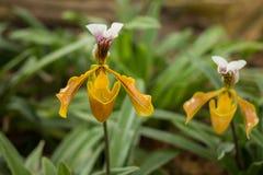 Цветок орхидеи и предпосылка листьев зеленого цвета Стоковые Изображения