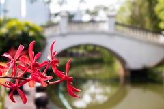 Цветок орхидеи рекой с предпосылкой bokeh стоковое фото