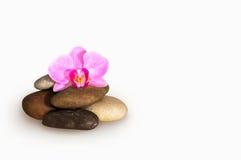 Цветок орхидеи в камнях Стоковое Изображение RF