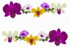 Цветок орхидеи изолированный на белизне Стоковое Фото