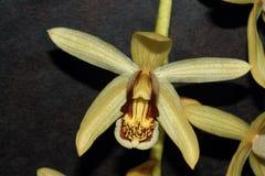Цветок орхидеи изолята стоковое изображение rf