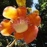Цветок орхидеи от Таиланда стоковое фото rf