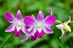 Цветок орхидеи стоковая фотография rf