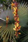 Цветок орхидеи Стоковое фото RF