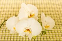 Цветок орхидеи Стоковые Изображения