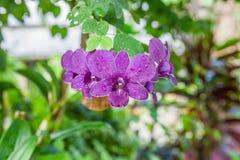 Цветок орхидей Стоковые Изображения