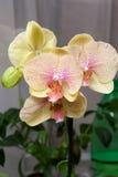 Цветок 4 орхидей Стоковые Изображения RF