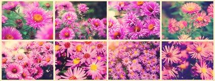 Цветок осени - ХРИЗАНТЕМА хризантемы Красивый коллаж фото, панорама тонизировать instagram стиля стоковое фото rf