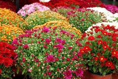 цветок осени цветастый Стоковое Фото
