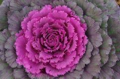 Цветок осени Стоковое Изображение RF
