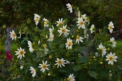 Цветок осени стоковое фото rf