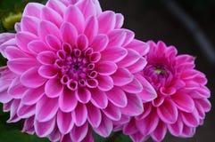 Цветок осени стоковые изображения rf