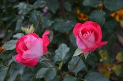 Цветок осени Стоковая Фотография RF