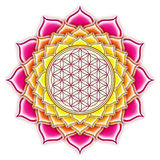 Цветок лотоса в реальном маштабе времени Стоковые Изображения RF