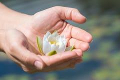Цветок лотоса в руке стоковое фото rf