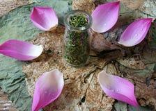 Цветок лотоса собрания, семя, чай, здоровая еда Стоковая Фотография RF