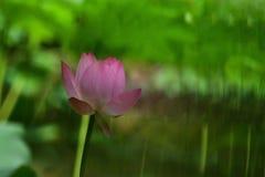 Цветок лотоса с влиянием множественной выдержки стоковое фото