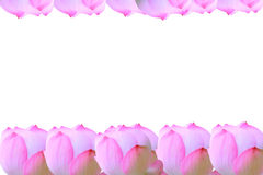Цветок лотоса для предпосылки Стоковые Фотографии RF