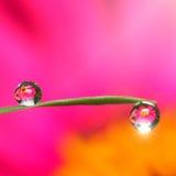 цветок отраженный в капельках Стоковое фото RF
