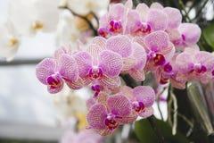 Цветок от Keukenhof стоковая фотография