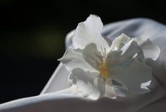 Цветок олеандра Стоковые Фотографии RF