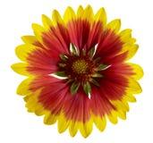 Цветок одеяла Стоковые Фотографии RF