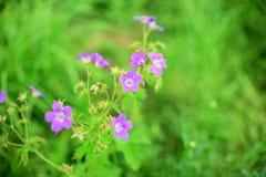 цветок одичалый Стоковое Изображение RF