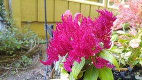 цветок одичалый Стоковые Изображения RF