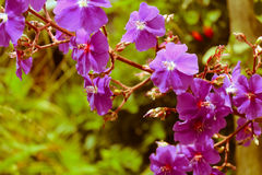 цветок одичалый Стоковые Изображения
