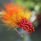 цветок одичалый Стоковые Фото