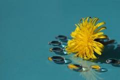 Цветок одуванчика и падения в голубом #2 Стоковые Фото