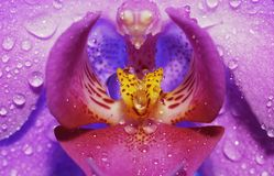 цветок падений стоковая фотография