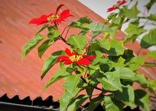 Цветок пасхи Стоковая Фотография