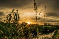 Цветок перед заходом солнца стоковое фото